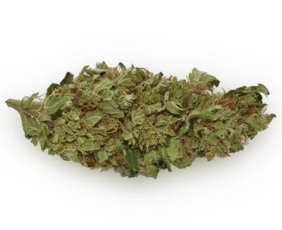CBD Blüten Lemon Haze - Premium CBD Blüten kaufen
