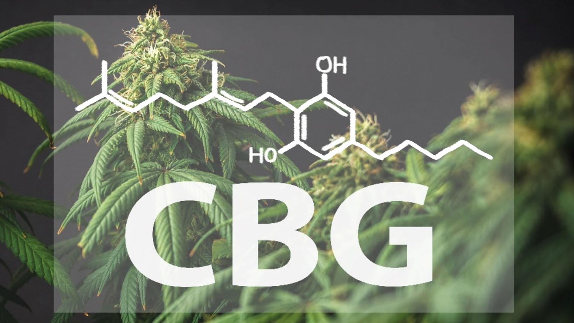 Was ist CBG – Cannabigerol Wirkung & Eigenschaften