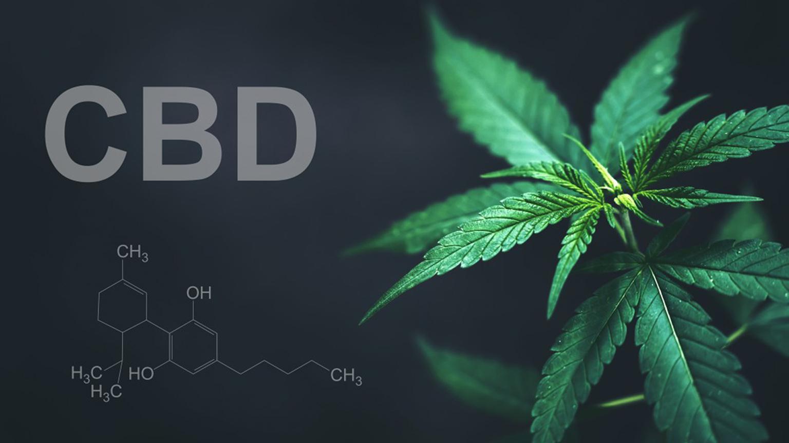 CBD VS CBDA – Diese Fakten sollte jeder über CBD & CBDA kennen – Mit 24 Studien über CBD