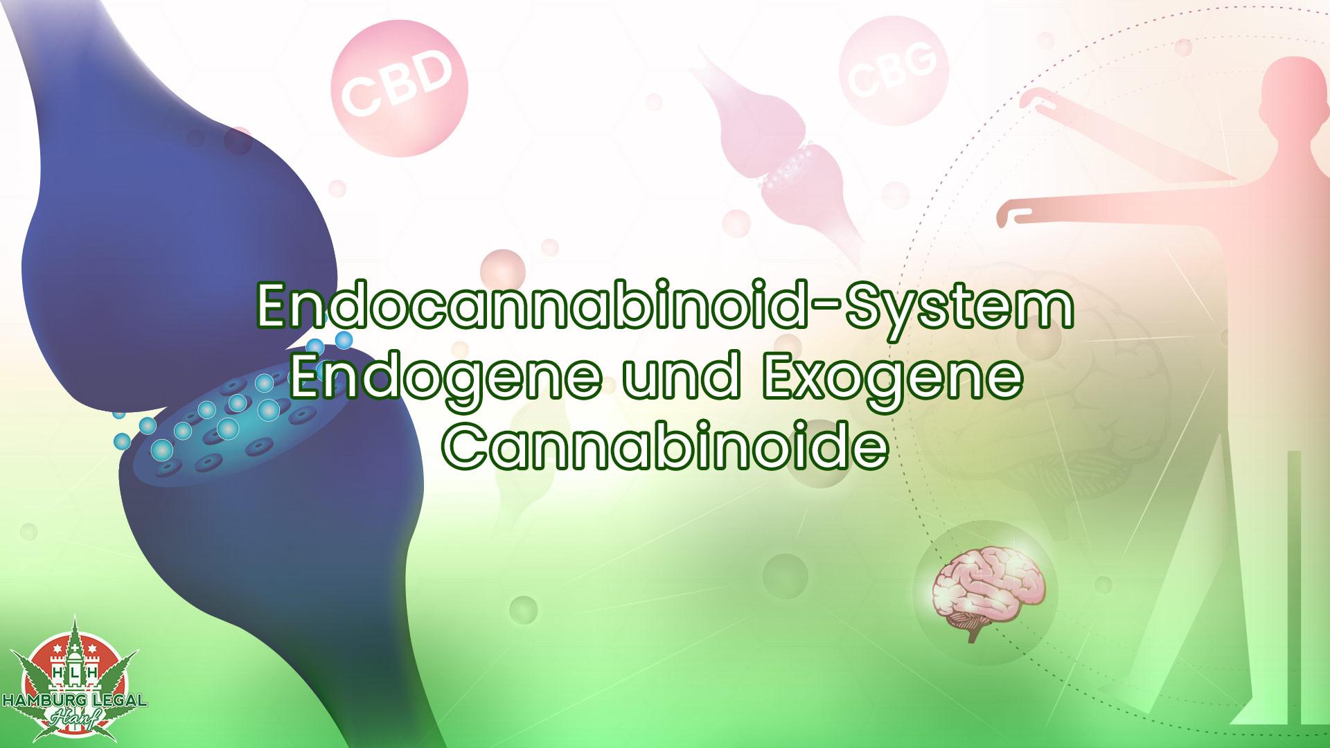 Endocannabinoid-System einfach erklärt – Endogene & Exogene Cannabinoide