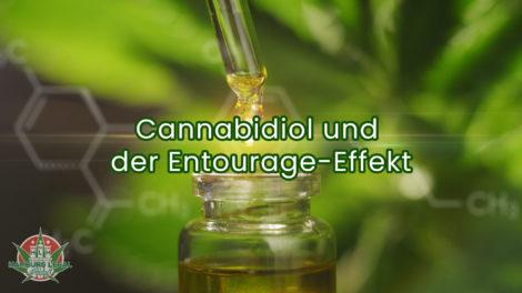 Der Entourage Effekt und Cannabidiol