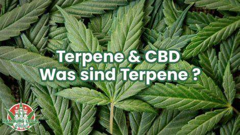 Terpene Wirkung - Terpene & Cannabis
