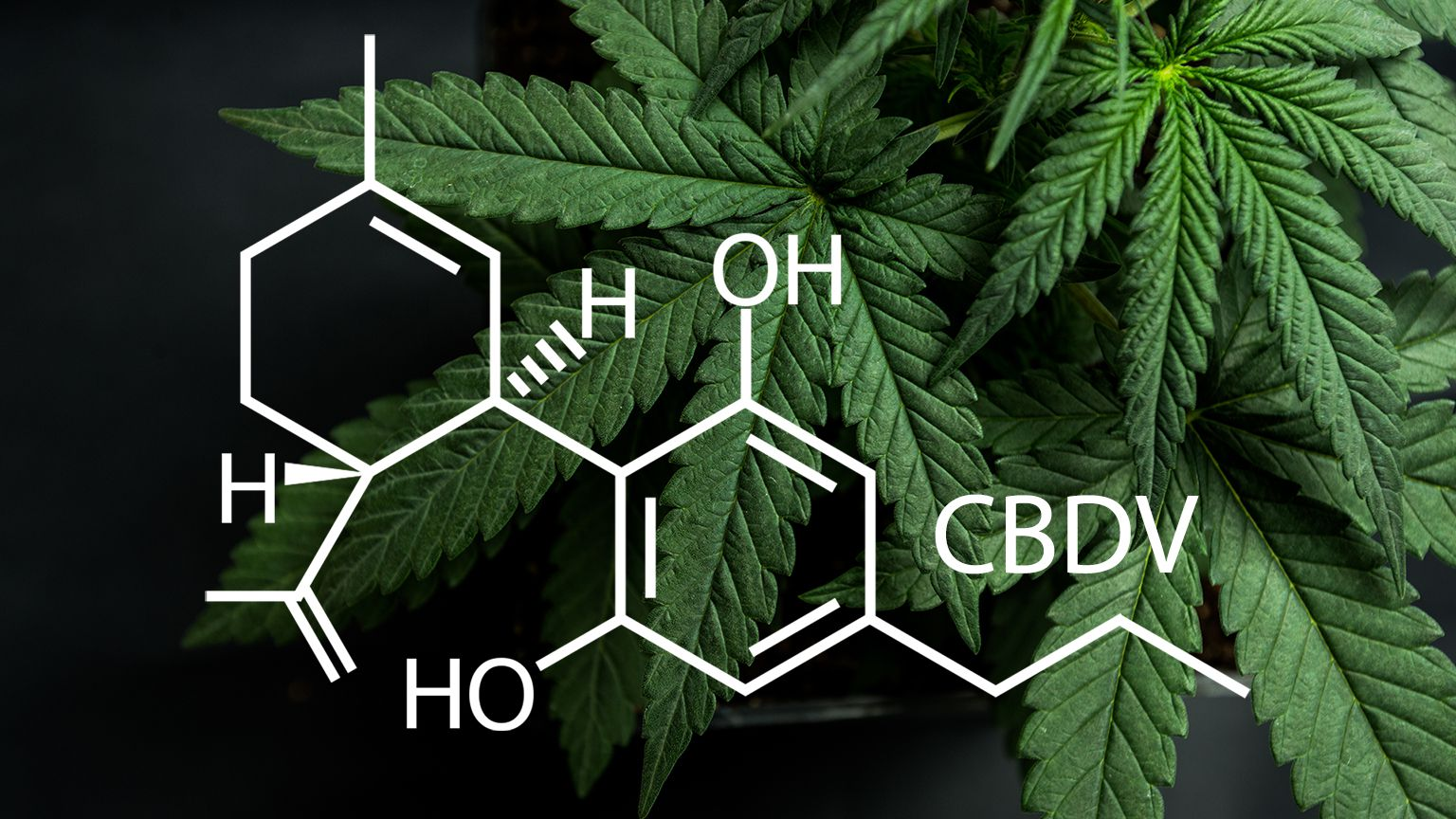Cannabidivarin – Was kann CBDV und CBDVA?
